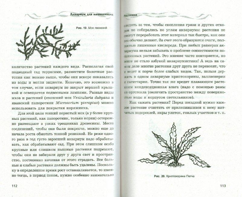 Иллюстрация 1 из 3 для Аквариум для начинающих - Алексей Марков | Лабиринт - книги. Источник: Лабиринт