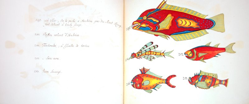 ����������� 1 �� 16 ��� Tropical Fishes of the East Indies - Samuel Fallours | �������� - �����. ��������: ��������