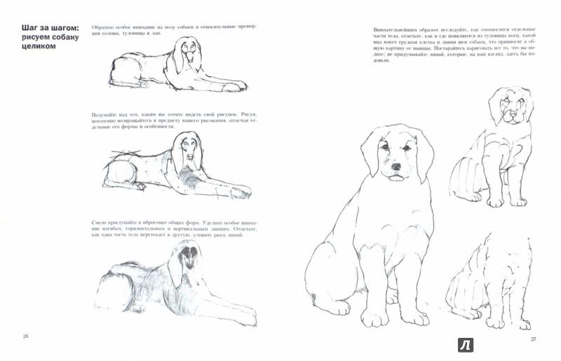Иллюстрация 1 из 6 для Учитесь рисовать собак - Джереми Морган | Лабиринт - книги. Источник: Лабиринт
