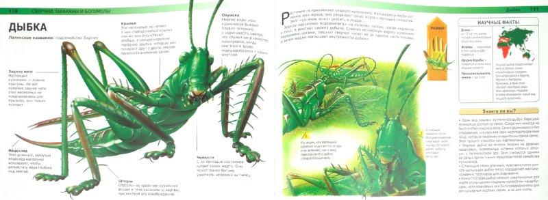 Иллюстрация 1 из 37 для Жуки и другие монстры мира насекомых - Сюзан Барраклаух | Лабиринт - книги. Источник: Лабиринт
