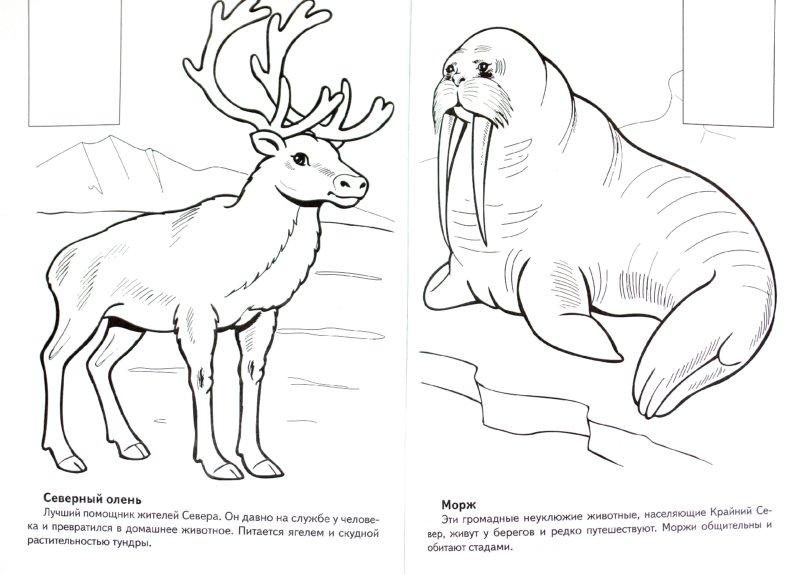 Иллюстрация 1 из 6 для Животные Арктики. Книжка-раскраска с наклейками - А. Андреева | Лабиринт - книги. Источник: Лабиринт