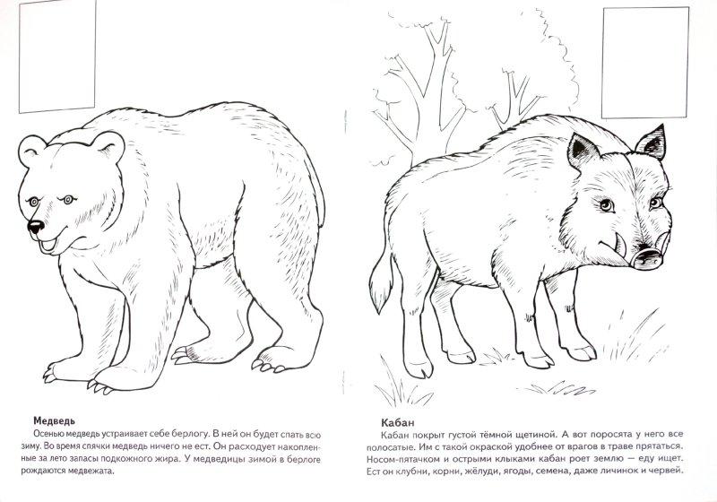 Иллюстрация 1 из 7 для Животные Европы. Книжка-раскраска с наклейками - О. Комарова   Лабиринт - книги. Источник: Лабиринт