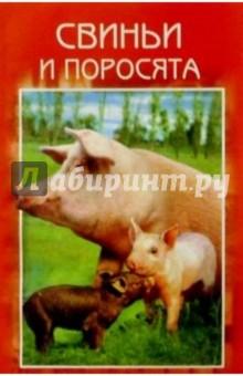 Свиньи и поросята. Разведение. Выращивание. Использование продукции