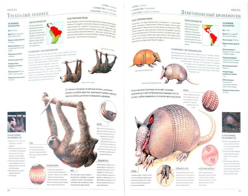 Иллюстрация 1 из 28 для Мегаэнциклопедия. Животные | Лабиринт - книги. Источник: Лабиринт