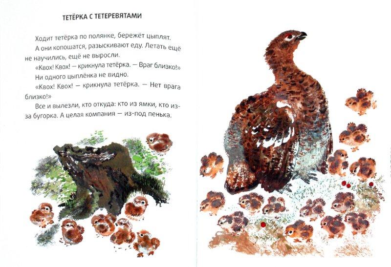 Иллюстрация 1 из 43 для Большие и маленькие - Евгений Чарушин   Лабиринт - книги. Источник: Лабиринт