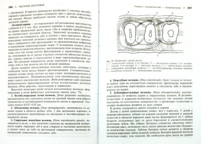 Иллюстрация 1 из 16 для Анатомия человека: учебник для стоматологических факультетов медицинских вузов | Лабиринт - книги. Источник: Лабиринт