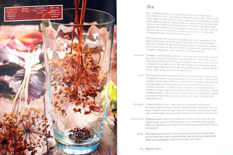 Иллюстрация 1 из 14 для Мой прекрасный огород - Шахова, Земская | Лабиринт - книги. Источник: Лабиринт