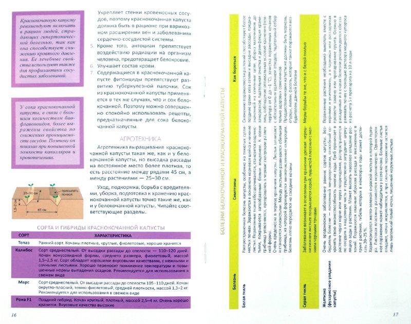 Иллюстрация 1 из 9 для Капуста от посева до урожая   Лабиринт - книги. Источник: Лабиринт