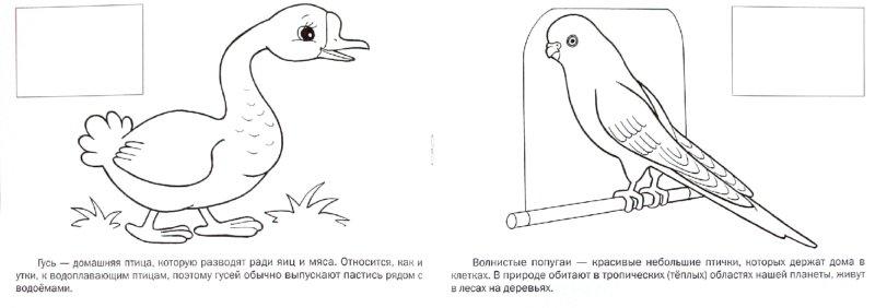 Иллюстрация 1 из 16 для Домашние птицы   Лабиринт - книги. Источник: Лабиринт