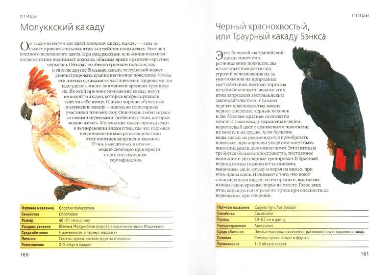 Иллюстрация 1 из 7 для Выбери себе питомца. 300 домашних животных. От привычных до экзотических - Мартин Клаудия | Лабиринт - книги. Источник: Лабиринт