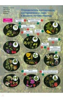 Определитель кустарников, кустарничков и лиан в весенне-летний периодБиология. Справочники. Дополнительные материалы<br>Основное назначение определителя - помочь начинающим исследователям природы узнать научные названия самых распространенных в Средней полосе России кустарников, кустарничков и лиан. В определитель включено 39 видов растений, растущих в лесах, по окраинам полей, водоемов, болот и населенных пунктов, а также в садах и парках. Включенные в определитель виды составляют примерно 80% от общей численности (встречаемости) кустарников, кустарничков и лиан Средней полосы, поэтому данный определитель может быть использован только как первый шаг в знакомстве с этими растениями.<br>