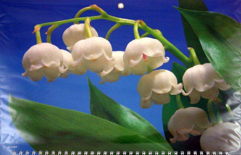 "Иллюстрация 1 из 2 для Календарь 2012 ""Ландыши"" (14247) | Лабиринт - сувениры. Источник: Лабиринт"
