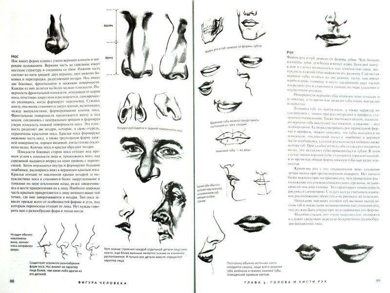 Иллюстрация 1 из 2 для Фигура человека. Техника рисования - Уолт Рид | Лабиринт - книги. Источник: Лабиринт
