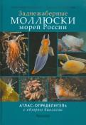 Мартынов, Коршунова: Моллюски морей России