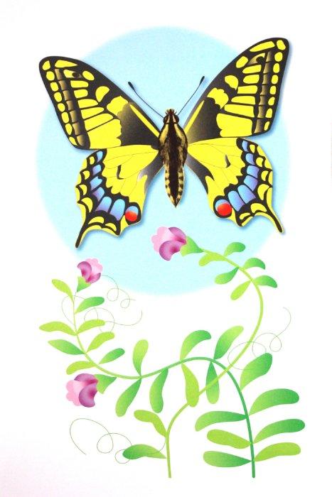 """Иллюстрация 1 из 22 для Дидактический материал """"Познаём окружающий мир"""". """"Бабочки"""" - Т. Куликовская   Лабиринт - книги. Источник: Лабиринт"""