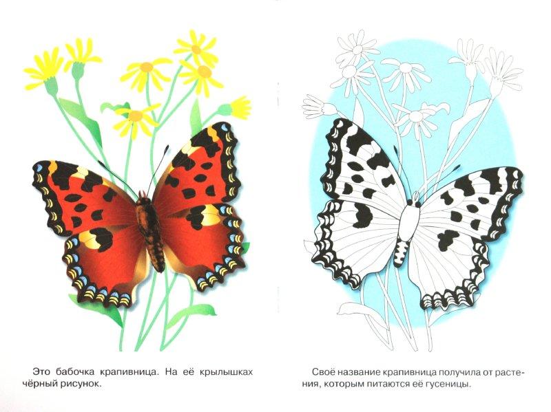 Иллюстрация 1 из 7 для Раскраска. Бабочки | Лабиринт - книги. Источник: Лабиринт