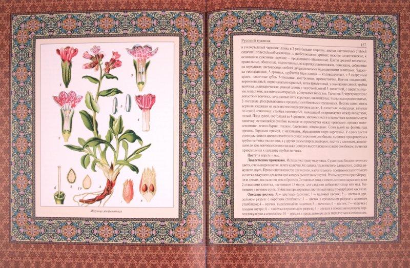 Иллюстрация 1 из 12 для Русский травник | Лабиринт - книги. Источник: Лабиринт