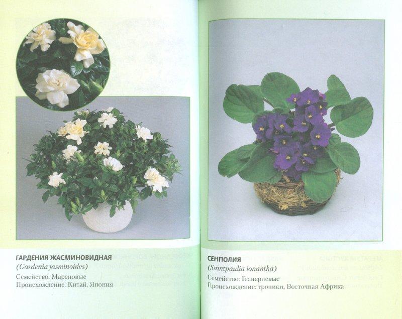 Иллюстрация 1 из 4 для Комнатные цветы - Виктор Антонов   Лабиринт - книги. Источник: Лабиринт