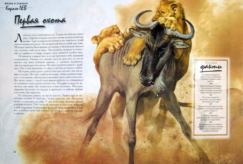 Иллюстрация 1 из 21 для Король Лев, Жизнь в саванне - Бернард Стоунхауз | Лабиринт - книги. Источник: Лабиринт