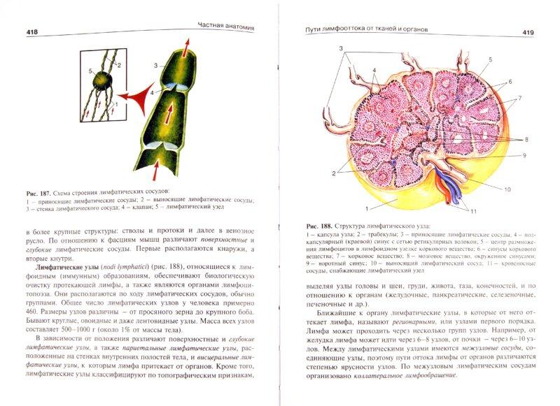 Иллюстрация 1 из 6 для Анатомия человека. В 2-х томах. Том 1 (+CD) - Михайлов, Чукбар, Цыбулькин | Лабиринт - книги. Источник: Лабиринт