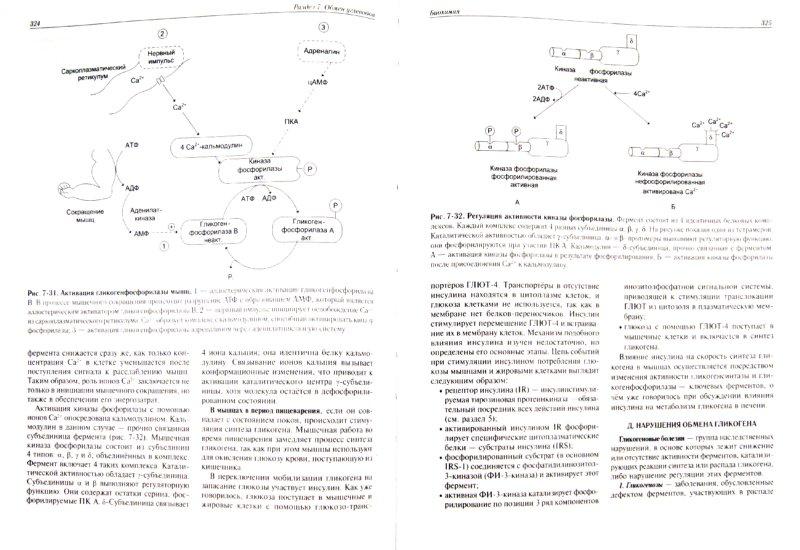 Иллюстрация 1 из 42 для Биохимия. Учебник - Авдеева, Алейникова, Андрианова | Лабиринт - книги. Источник: Лабиринт