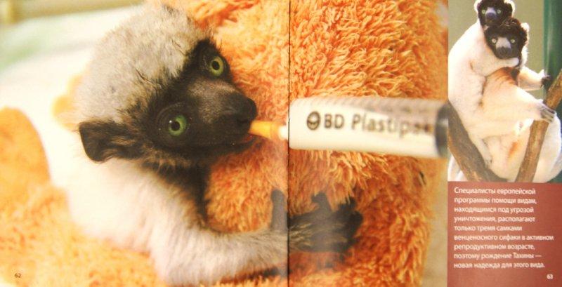 Иллюстрация 1 из 23 для Детеныши животных - Блэйман, Истланд | Лабиринт - книги. Источник: Лабиринт