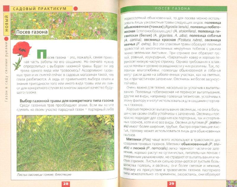 Иллюстрация 1 из 7 для Газон в саду своими руками - Елена Колесникова | Лабиринт - книги. Источник: Лабиринт