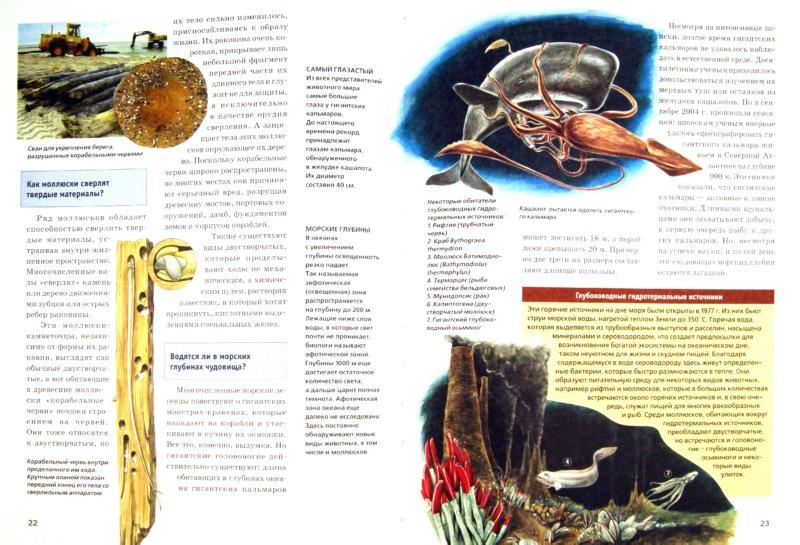Иллюстрация 1 из 19 для Мир моллюсков от улиток до осьминогов - Дитмар Мертенс   Лабиринт - книги. Источник: Лабиринт