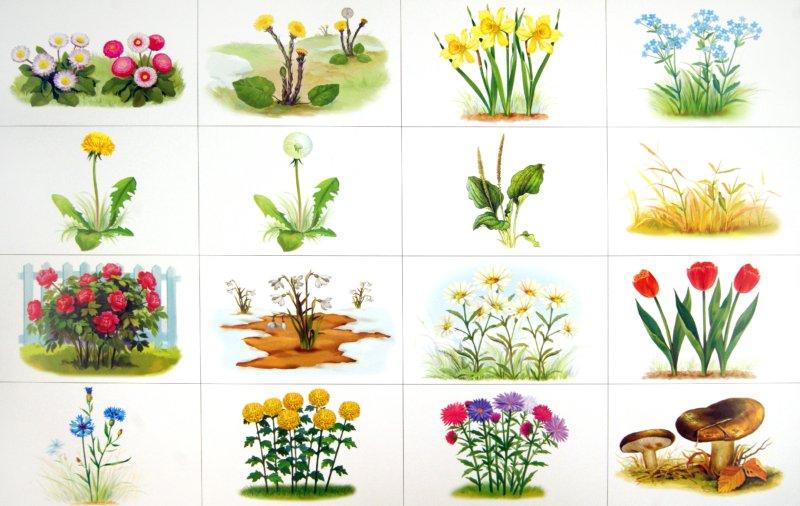 Иллюстрация 1 из 23 для Календарь природы. Демонстрационное учебно-наглядное пособие для занятий с детьми - Жанна Новикова | Лабиринт - книги. Источник: Лабиринт