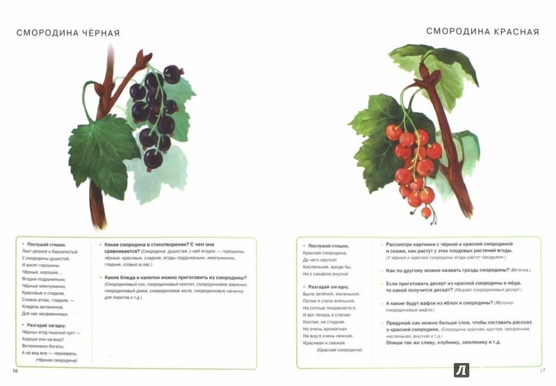 Тематический словарь в картинках грибы ягоды