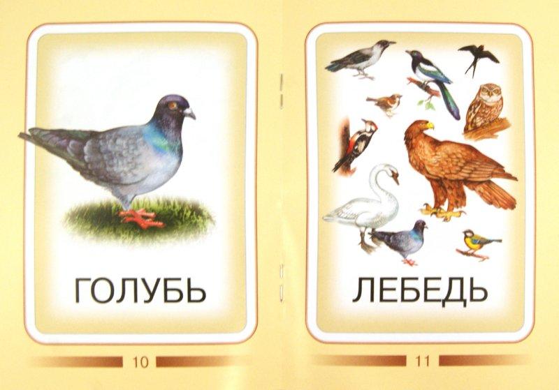 Иллюстрация 1 из 6 для Птицы | Лабиринт - книги. Источник: Лабиринт