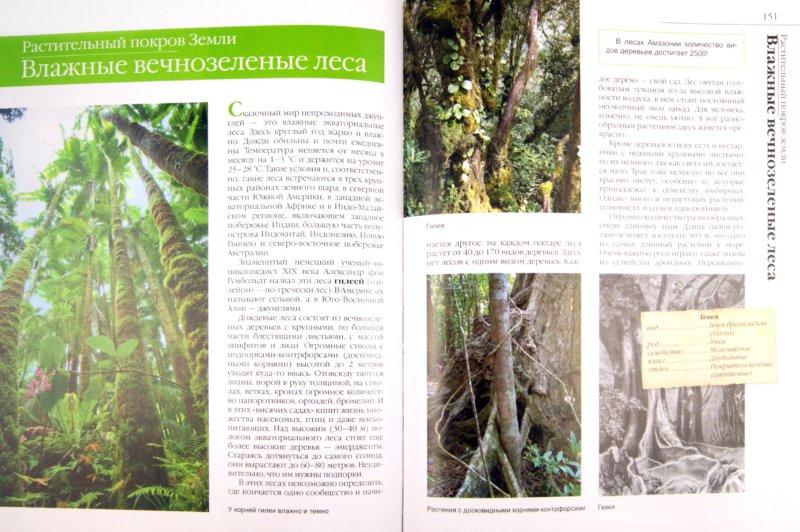 Иллюстрация 1 из 51 для В мире растений - Дикарева, Леонова | Лабиринт - книги. Источник: Лабиринт