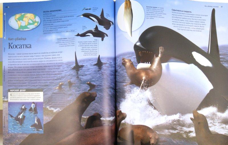 Иллюстрация 1 из 7 для Животные - Вогт, Лампкин, Макмиллан | Лабиринт - книги. Источник: Лабиринт