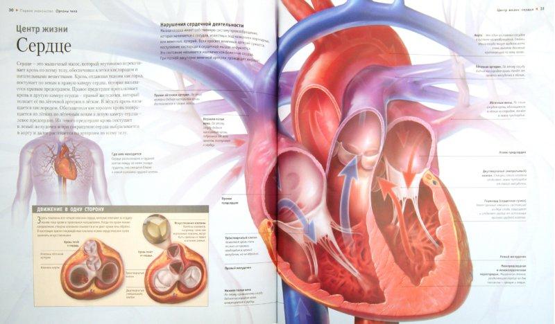 Иллюстрация 1 из 6 для Тело человека - Линда Калабрези | Лабиринт - книги. Источник: Лабиринт