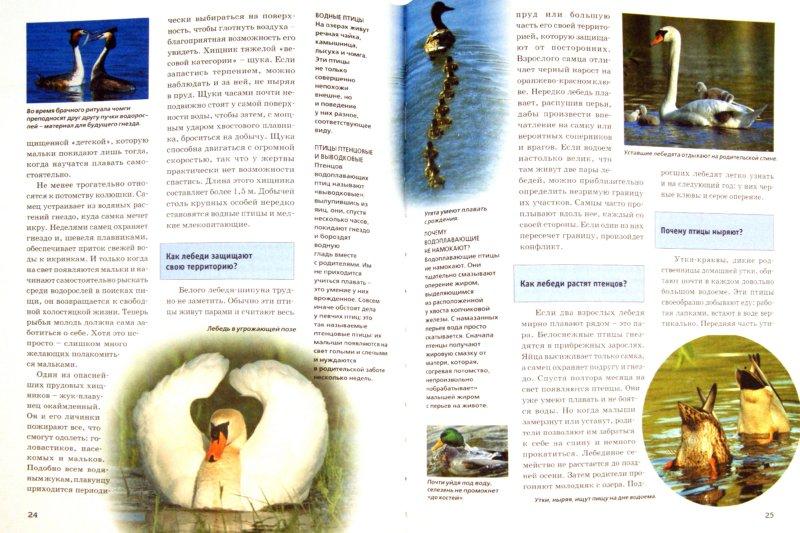 Иллюстрация 1 из 15 для Зачем и почему. Природа: изучение и защита - Андреа Мертини   Лабиринт - книги. Источник: Лабиринт