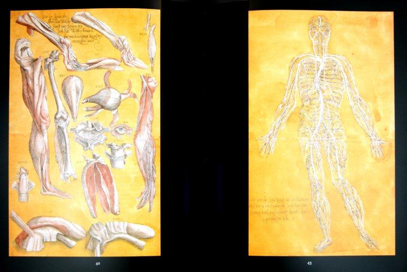 Иллюстрация 1 из 3 для Анатомия № 18 | Лабиринт - книги. Источник: Лабиринт