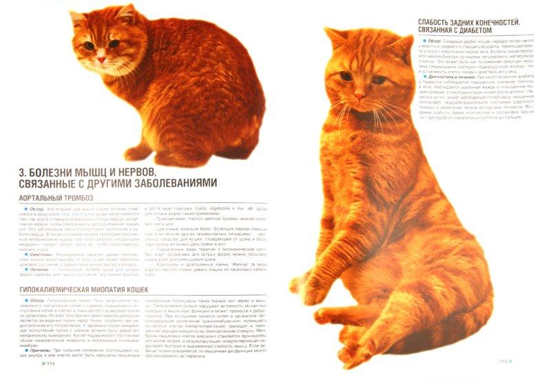 Иллюстрация 1 из 31 для Ваша кошка. Иллюстрированный диагностический атлас. Здоровье, первая помощь - Георгий Галанин   Лабиринт - книги. Источник: Лабиринт