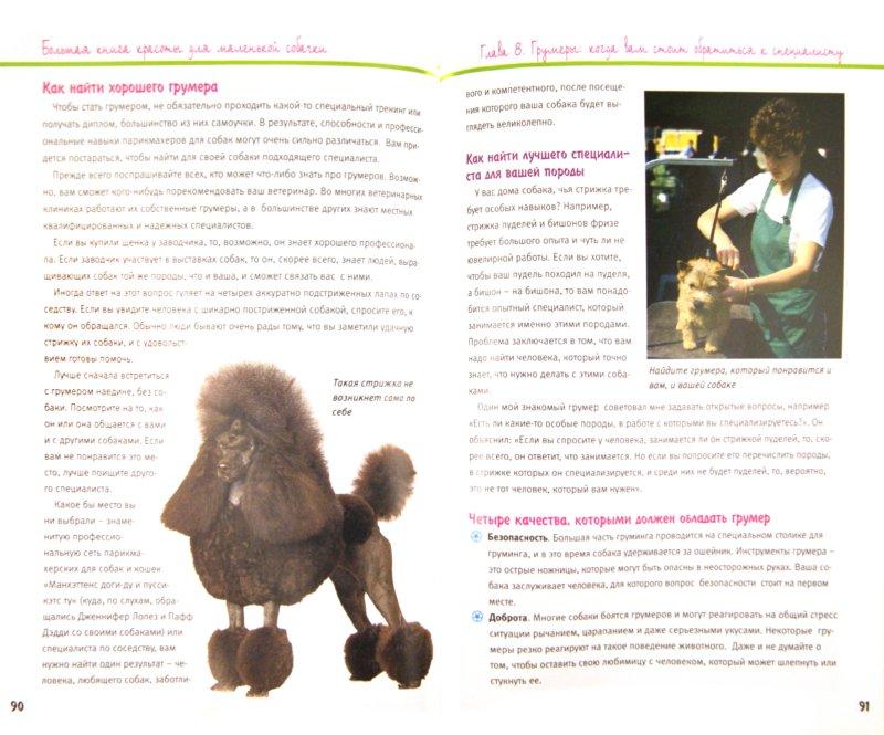 Иллюстрация 1 из 10 для Большая книга красоты для маленькой собачки - Дебора Вуд | Лабиринт - книги. Источник: Лабиринт