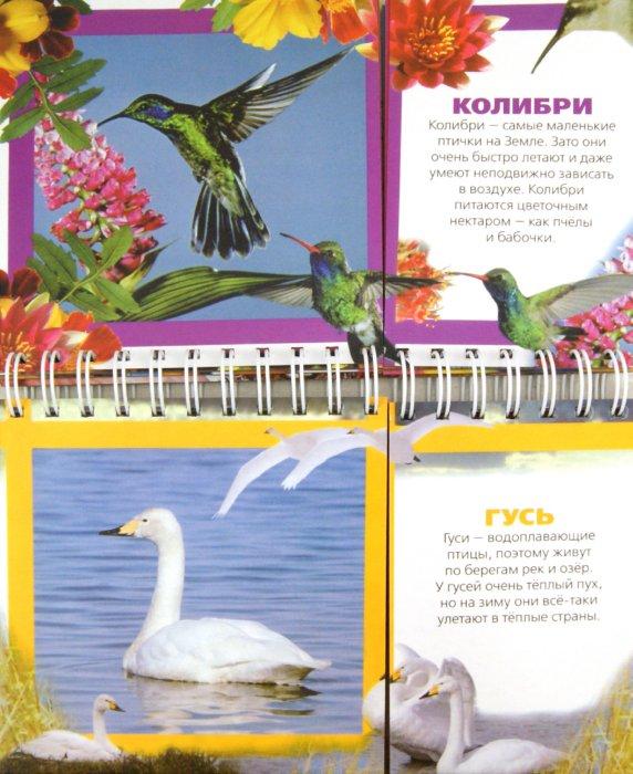Иллюстрация 1 из 17 для Птицы | Лабиринт - книги. Источник: Лабиринт