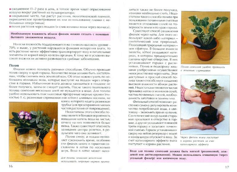 Иллюстрация 1 из 8 для Узамбарские фиалки. Секреты ухода - Надежда Ширяева   Лабиринт - книги. Источник: Лабиринт