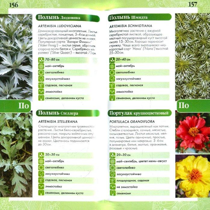 Иллюстрация 1 из 8 для Садовые цветы (Ваш мини-эксперт) | Лабиринт - книги. Источник: Лабиринт