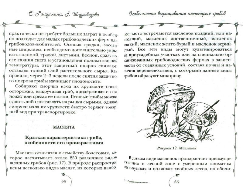 Иллюстрация 1 из 6 для Грибы выращиваем на своем участке - Ращупкина, Шнуровозова | Лабиринт - книги. Источник: Лабиринт