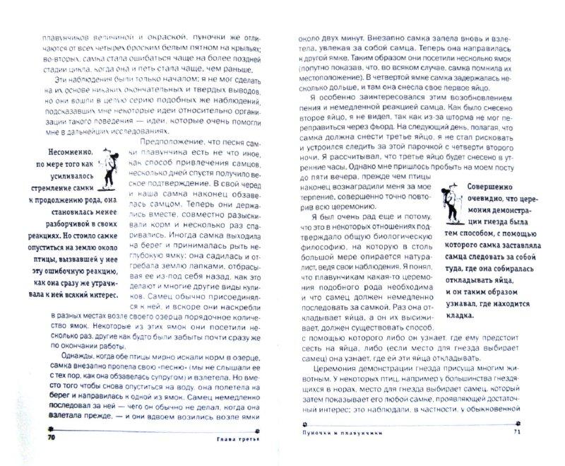Иллюстрация 1 из 16 для Осы, птицы, люди - Нико Тинберген | Лабиринт - книги. Источник: Лабиринт
