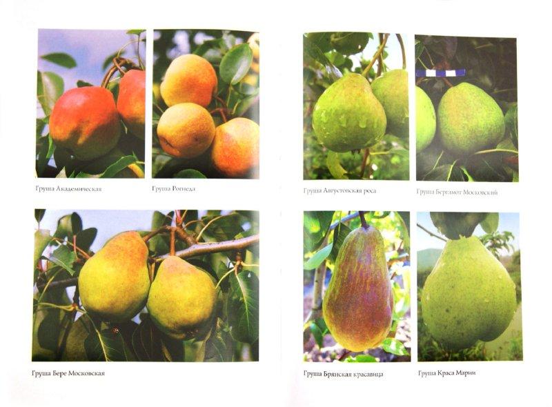 Иллюстрация 1 из 11 для Энциклопедия лучших сортов плодовых деревьев - Владимир Сусов   Лабиринт - книги. Источник: Лабиринт