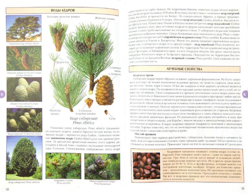 Иллюстрация 1 из 8 для Все о лечебных свойствах лесных ягод и плодов - Сергей Афонькин   Лабиринт - книги. Источник: Лабиринт