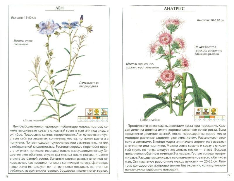 Иллюстрация 1 из 5 для Садовые цветы | Лабиринт - книги. Источник: Лабиринт
