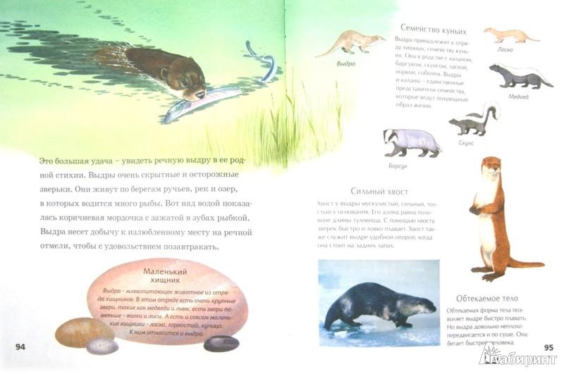 Иллюстрация 1 из 49 для Детская энциклопедия животных. Маленькие и пушистые - Тинг Моррис | Лабиринт - книги. Источник: Лабиринт