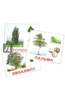 """Комплект карточек """"Деревья"""" 16,5х19,5 см."""