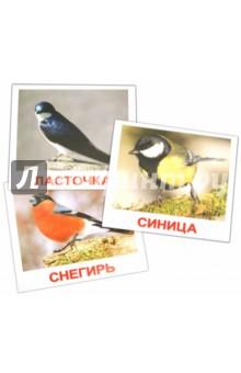 """Комплект карточек """"Птицы"""" 16,5х19,5 см."""