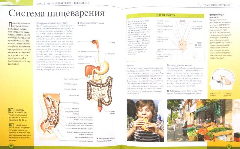 Иллюстрация 1 из 16 для Тело человека - Адольфо Тачлицки | Лабиринт - книги. Источник: Лабиринт